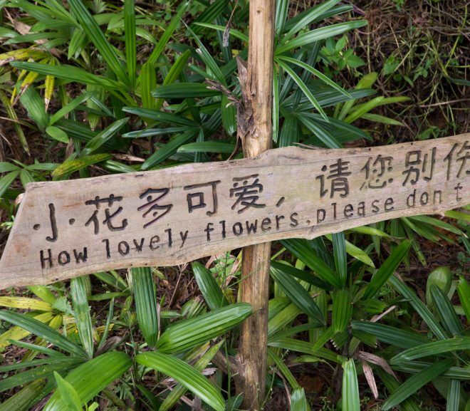 yangshuo 2016 07485 1 660x577 - 7 Reasons You Can Do Better Than Google Alerts