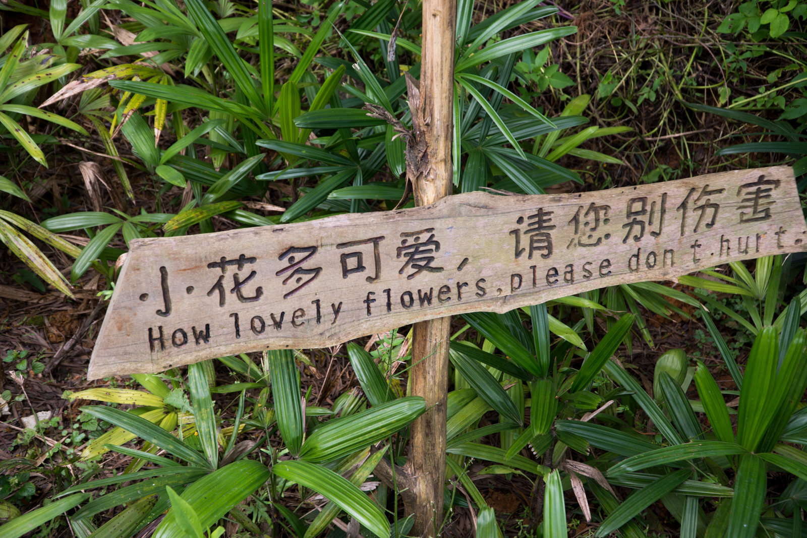 Sign Chinese Bad Translation